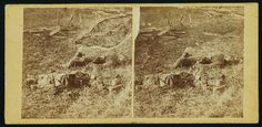 Group of dead Confederate soldiers after the battle of Antietam, photographed by Alexander Gardner, circa Sept 1862. #civilwar