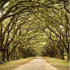 Savannah, GA - Spanish moss covers everything - beautiful!