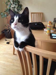 un hermoso gato