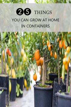 Here Are 25 Things You Can Grow At Home In Containers