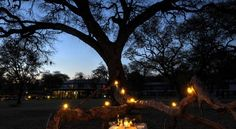 ZAR Offering free WiFi and a garden, Hwange Safari Lodge is located in Hwange. Free private parking is available on site. Great Hotel, Free Wifi, Safari, Garden, Inspiration, Home Decor, Biblical Inspiration, Garten, Decoration Home