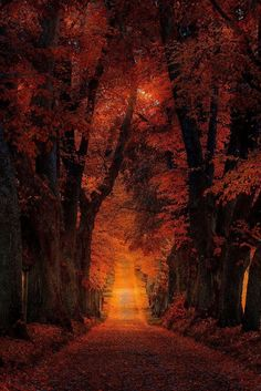 tree forest autumn way path landscape nature orange Fall Pictures, Nature Pictures, October Pictures, Halloween Pictures, Beautiful World, Beautiful Places, Beautiful Pictures, Image Nature, Autumn Scenes