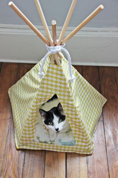Pets, Home & Garden: Ideal toys for small cats Niche Chat, Diy Tipi, Cat House Diy, Ideal Toys, Small Cat, Diy Stuffed Animals, Cat Toys, Animal Kingdom, Dog Cat