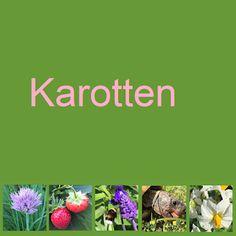 Die Karottenraupe und die Schildkröte teilen sich das Kraut! #edgarten #gartenblog Kiwi, Collagen, Brunch, Plants, Schreck, Zucchini, Dessert, Mint