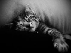 Kara in B&W  #cat #life #sleeping