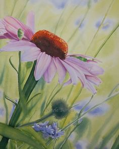 Floral Art Echinacea flower Painting 10x 14 by NicoleBarrosArt, $22.00