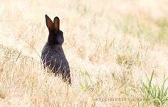 bunny | Flickr - Photo Sharing!