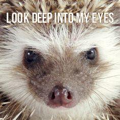 Hypnotherapist-  Look deep into my eyes
