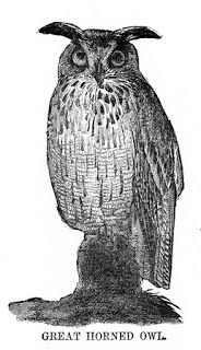 bumble button: Victorian prints and pictures of Owls Free for you...