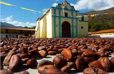 El tostado de la semilla de cacao al sol.El cacao simbolizaba para los mayas vigor físico y longevidad. Estos crearon un brebaje amargo hecho de semillas de cacao que consumían exclusivamente los reyes y los nobles y también usado para dar solemnidad a determinados rituales sagrados