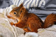Free Image on Pixabay - Squirrel, Baby, Young Animal Free Pictures, Free Images, Online Marriage, Baby Squirrel, Young Animal, Little Babies, New Moms, Pets, Animals