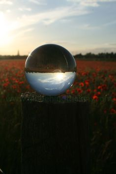 """""""Time to Reflect"""", Poppy field in South Cambridgeshire UK Summer 2015. Check out www.girlbehindthelens.com"""