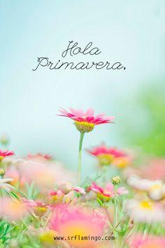 Hola Primavera,  www.srflamingo.com  #spring #primavera #march #hellospring