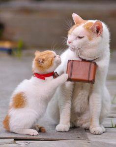 私は、にゃらん。そんなにせがまれても、鞄の中身は秘密なにょだ。 pic.twitter.com/ryhe6I6w  (https://twitter.com/nyalan_jalan/status/225808074907193344)