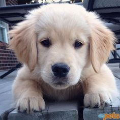The Cutest Pets on Twitter This Week! | SO HUGGABLE | And the award for Most Squeezable Puppy goes to ...  Teegan! Since we give the award, can we hug this cutie fur-ever?