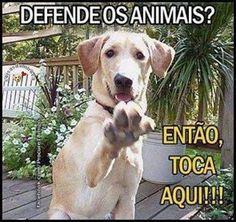 ✋✋✋ #amoanimais #cachorro #gato #filhode4patas #petshop #petmeupet