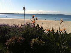 Brighton Le Sands Beach