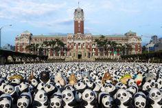 Tutti i panda del mondo in una sola foto: ne sono rimasti davvero pochi.