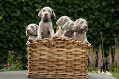 Los primeros meses de vida son una etapa fundamental para nuestro perro, ya que todo aquello que le enseñemos a nuestro cachorro lo aplicará cuando sea un