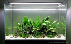 A planted aquarium displayed on www.urbanaquaria.com. The tank is 60 cm x 30 cm x 36 cm