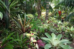 Bromeliads and palms