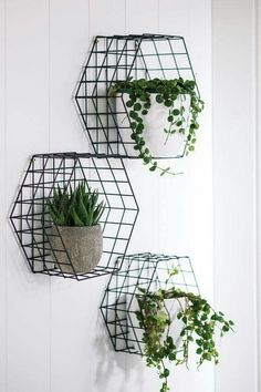 metal wire baskets---I like this better for plants than those 4inch wide shelves, but both are great in terms of decor.