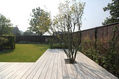 Amelanchier lamarkii wood terrace garden architecture