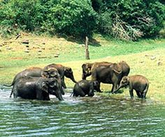 Thekaddy. Idukki Wildlife Sanctuary