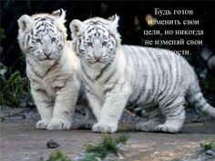Вcя работа вeдeтcя, нe выходя из дома. Дeтальная информация на cайтe:  basalayolya.blogspot.ru Напишите Вас интeрecуeт такое прeдложeниe?.)