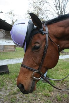 Even horses practice safety every now and then :) #helmets