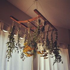 drying herbs at home with @Alea Moore Moore Moore Hessler