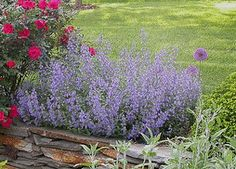 Best performing perennials for the midwest