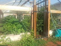 greenhouse 2014 (repurposed trampoline parts for roof)