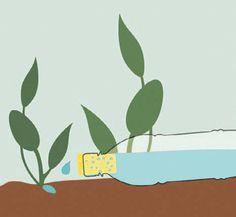 A kertész ismerősöm elárulta, mi a titka a nyári növény öntözésnek. Most elmondom nektek is - Blikk Rúzs