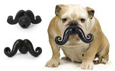 Dog mustache toy!!