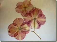 23 best pressed flowers images on pinterest dried flowers dry pressed flowers press flowerswax paperdiy mightylinksfo