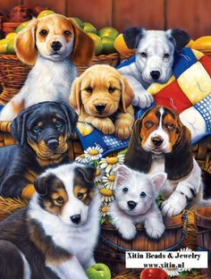 Diamond  Painting Puppies  45x60cm