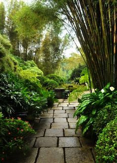 1000 images about tropical landscape ideas on pinterest for Queensland garden design