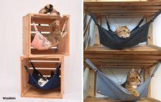 Animal Room, Cat Hammock, Pet Dogs, Pets, Cat Playground, Cat Shelves, Dog Rooms, Cat Room, Pet Furniture
