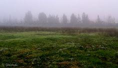 Historias de Luces: Oasis en la Niebla