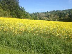 Spring in Panzano in Chianti