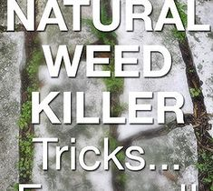 The True Facts On Natural Weed Killers