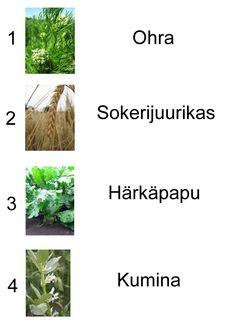 Finland, Herbs, Science, Nature, Instagram, Peda, Naturaleza, Herb, Flag