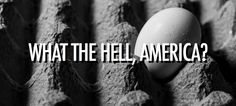 Americans – why do you keep refrigerating your eggs? is one of the only countries on Earth that keeps chicken eggs in cold storage. Wheat Belly, Egg Wash, Chicken Eggs, Chicken Life, Raising Chickens, Chickens Backyard, Convenience Food, Natural Living, Eggs
