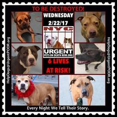 TO BE DESTROYED 02/22/17 - - Info   To rescue a Death Row Dog, Please read this:http://information.urgentpodr.org/adoption-info-and-list-of-rescues/  To view the full album, please click here:http://nycdogs.urgentpodr.org/tbd-dogs-page/ -  Click for info & Current Status: http://nycdogs.urgentpodr.org/to-be-destroyed-4915/