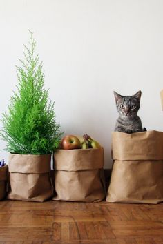 All those new toys (and your cat) need a home. This one is eco-friendly and washable, too.