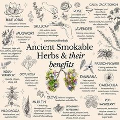 Healing Herbs, Medicinal Plants, Natural Healing, Magic Herbs, Herbal Magic, Plant Magic, Natural Medicine, Herbal Medicine, Herbal Remedies
