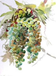 Green Grapes Original watercolor painting grape by ORIGINALONLY, $28.00