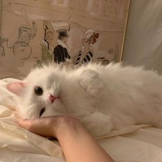 Cute Kittens, Cute Baby Cats, Cute Little Animals, Cats And Kittens, Adorable Animals, Bb Chat, Animals And Pets, Funny Animals, Funny Cats