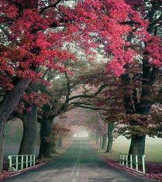 Autumn road ,Poland